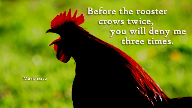 Before the rooster crows